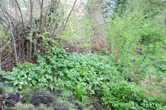 Wildes im Garten