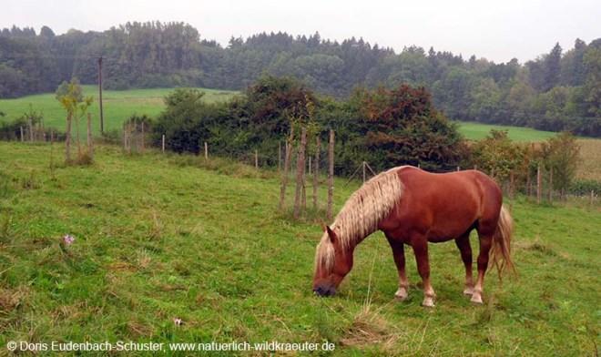 Herbstzeitlose_Pferd